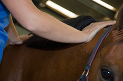 paardensportmassage-kim3