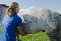paardensportmassage-kim4