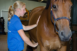 paardensportmassage-kim5